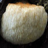 Grow Yourn Own Mushrooms Log Kit - Lions Mane